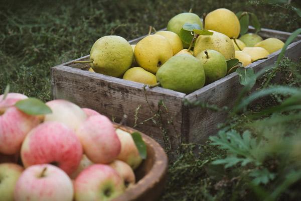 Äpfel und Birnen in Holzkisten auf einer Wiese.