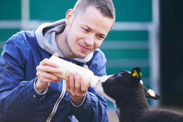 Ein Matt füttert ein schwarzes Lamm mit der Flasche.